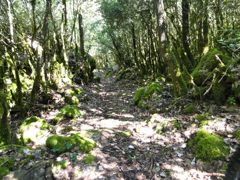Bosque gnomos
