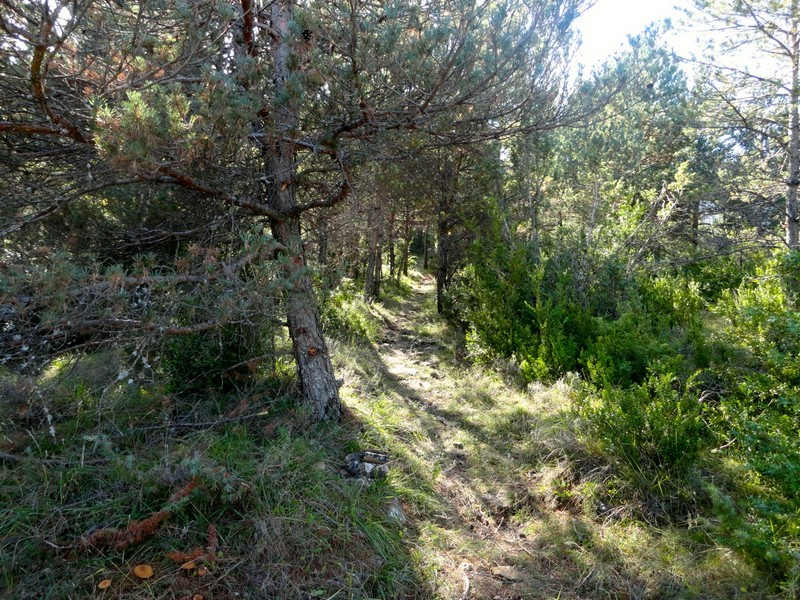 Ultimo tramo del sendero de Ulle