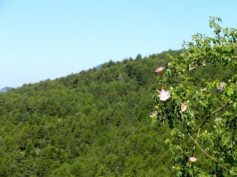 Foto de una florecilla