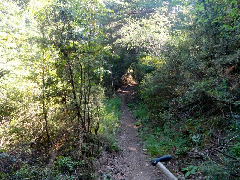 Túnel bosque de bojs
